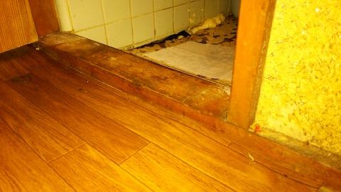 トイレ床拡大写真20151104